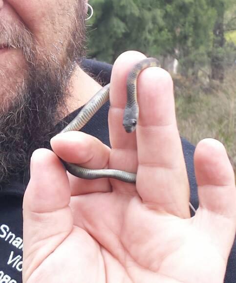 Baby snake 2